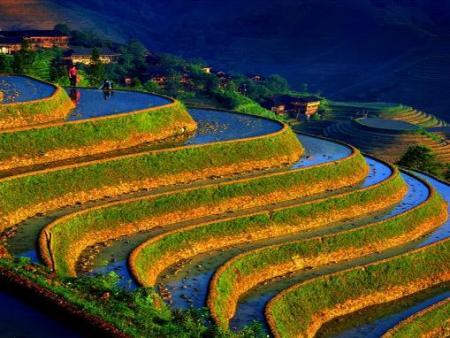 cultivos-china.jpg
