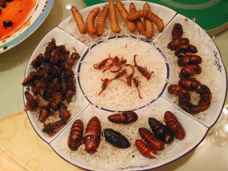 insectos.jpg